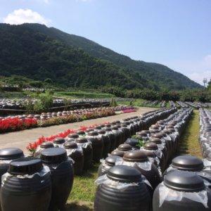黒酢の製造光景