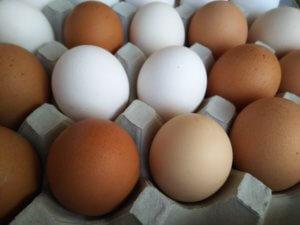 たくさんの卵