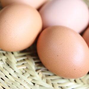 卵の安全性