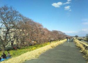 熊谷市さくら祭り2019