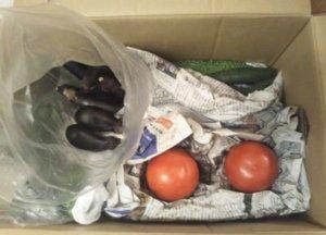 実家から送られてきた野菜