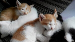 熟睡する猫たち